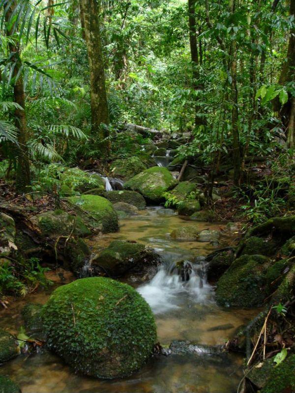 amazon ormanları